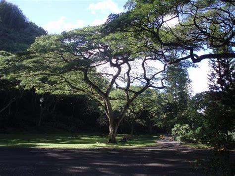 Waimea Arboretum And Botanical Garden Waimea Falls Photo De Waimea Arboretum And Botanical Garden Oahu Tripadvisor