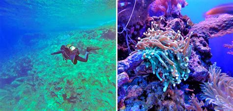 best scuba diving websites diving in anilao batangas of the philippines a