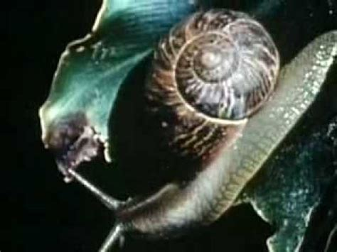 watch backyard science snails backyard science clip youtube