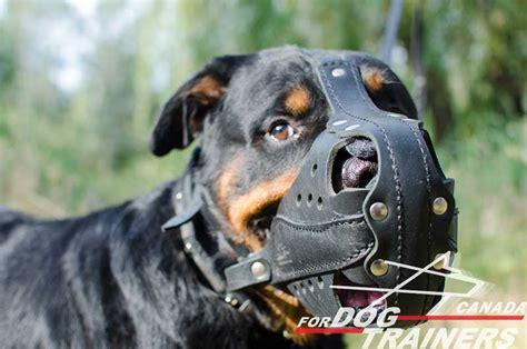 rottweiler muzzle purchase lesather walking muzzle
