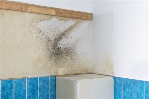 Cleaning Walls And Ceilings by How To Clean Mold Bathroom Walls And Ceiling