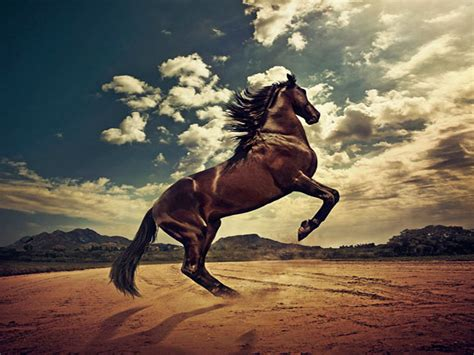 wallpaper hd horse horses hd wallpapers full hd wall pictures