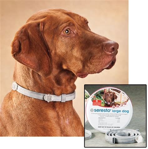 seresto flea tick collar flea tick seresto flea tick collars for dogs