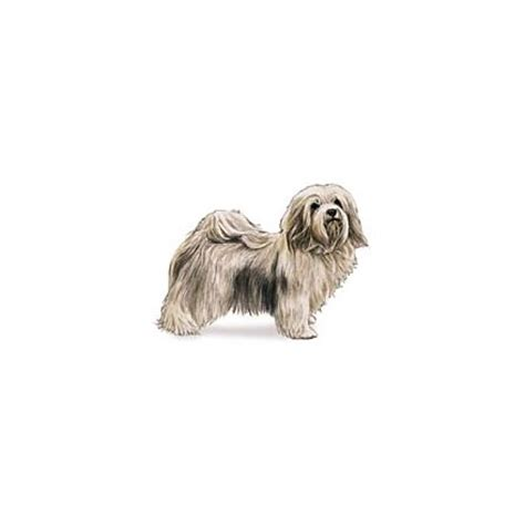 havanese clothes havanese kuka s world designer clothes and luxury accessories for pets