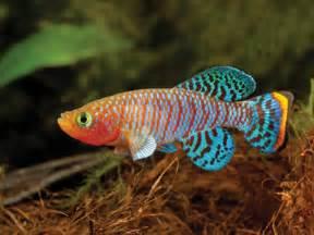 Aquarium: Over the Rainbow   Details   Articles   TFH Magazine