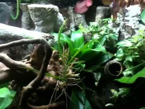 Zr Tropical terrarium tropical