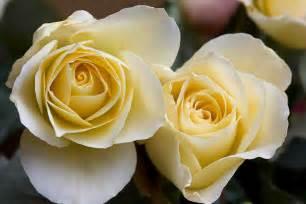 Planting Tropical Plants - elina rose hello hello plants amp garden supplies