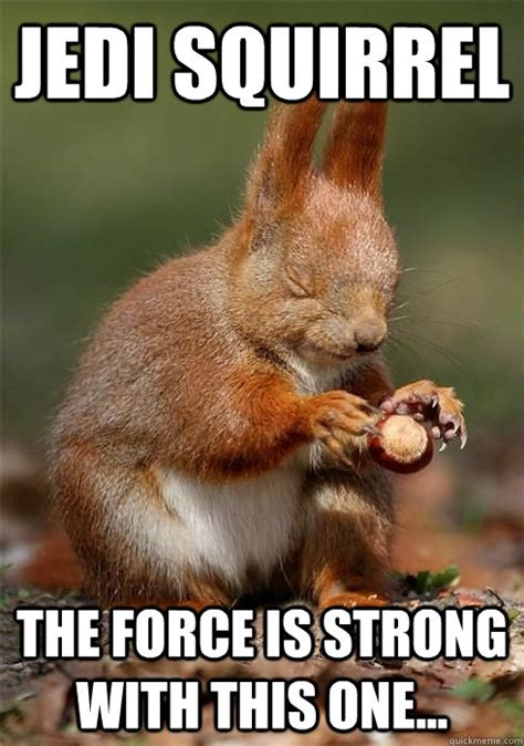 The Force Is Strong With This One Meme - jedi squirrel the force is strong with this one misc