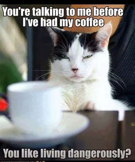 Sassy Cat Meme - spoktv sassy cats funny pinterest cats