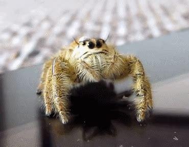 tarantula molting gif