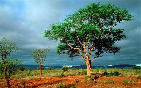 the national kruger national park south africa