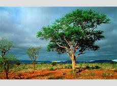 Kruger National Park wallpapers | Kruger National Park ... 134d