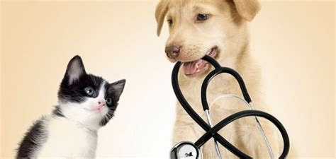 puppy check up veterinary wellness check up wetaskiwin animal clinic
