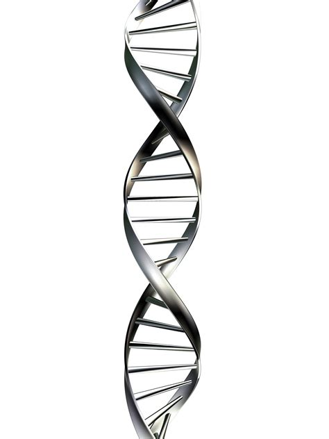 1000 images about dna on pinterest double helix the