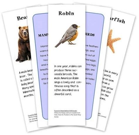 printable animal sorting cards animal classification cards print science social studies
