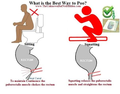 bathroom posture what is the proper way to poo