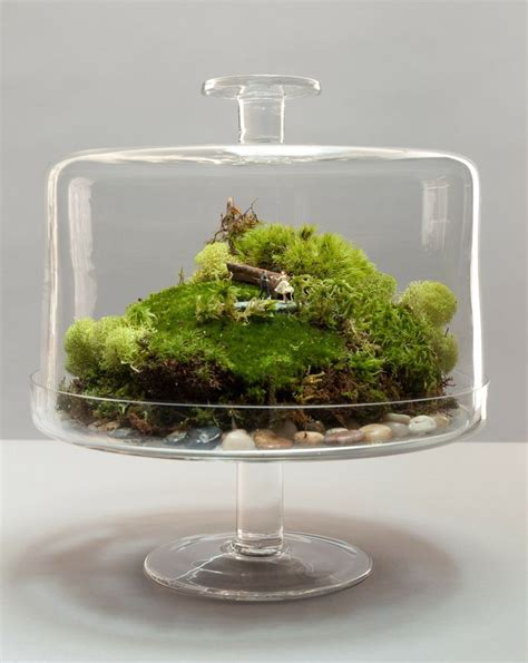 Home Decor From Around The World by How To Make A Terrarium Take A Look At These 7 Adorable