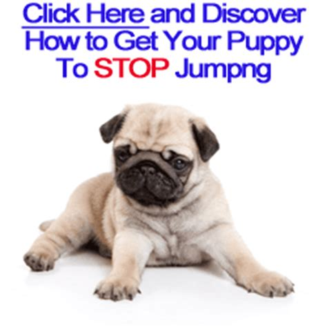 how to stop my puppy jumping on the sofa dog leash training tips stop puppy from jumping on counter