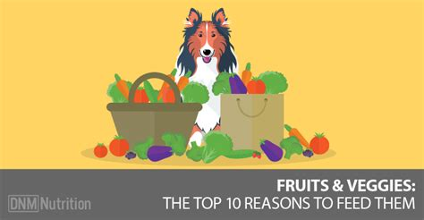 veggies for dogs 10 reasons to feed your vegetables and fruit dogs naturally magazine