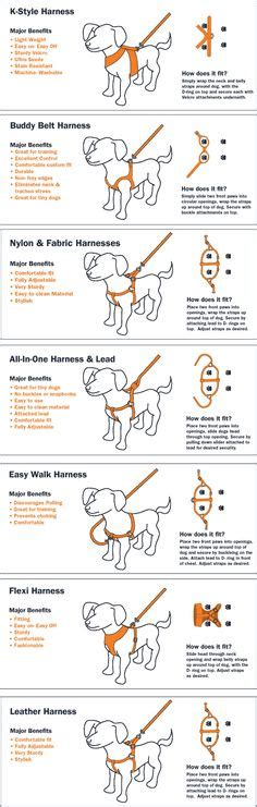 types of harnesses 1000 images about infographics on your pets and infographic