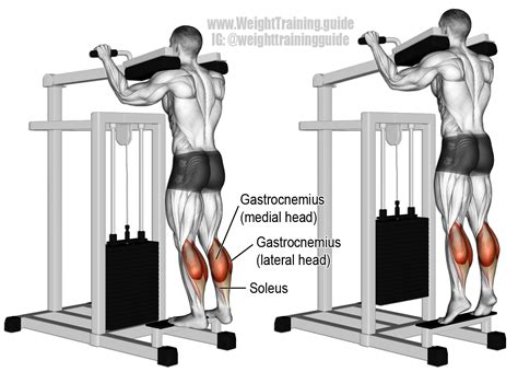 smith machine seated calf raise machine standing calf raise an isolation exercise target