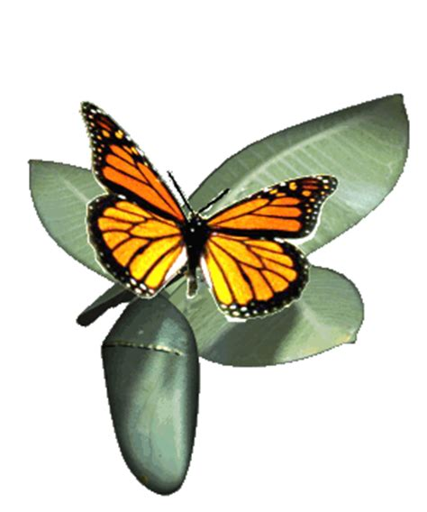 Butterflies Images Orange Butterfly Animated Wallpaper And Animated Images Of Butterfly