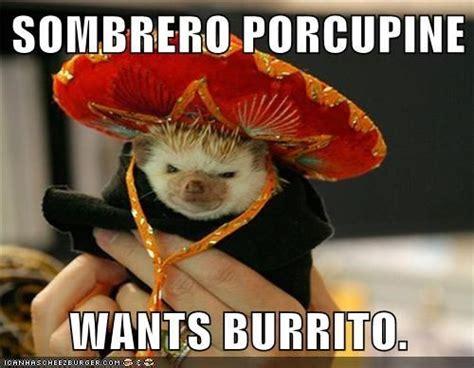 Sombrero Meme - sombrero porcupine wants burrito cheezburger animaux