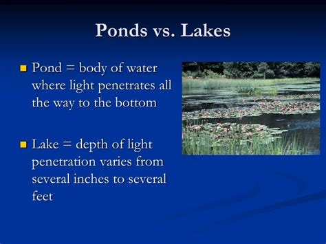 the biology of lakes and ponds biology of habitats series books ppt lentic systems powerpoint presentation id 5134162