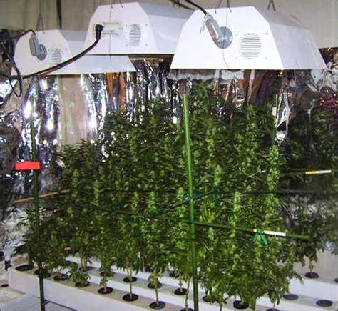 marijuana growing operation  rental home
