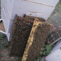 How To Kill Wax Worms In A Beehive Ehow