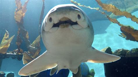 Shark In The sharks distinct personalities new study finds