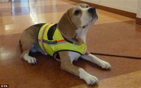 c diff in dogs meet cliff the remarkable sniffing who detects hospital superbugs daily