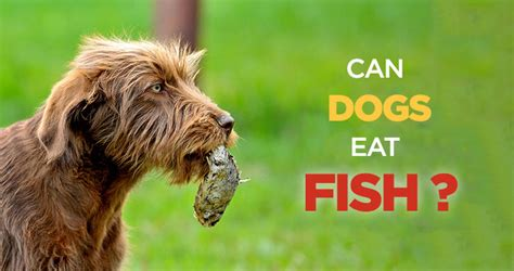 is fish for dogs can dogs eat fish is fish bad for dogs the myths about food