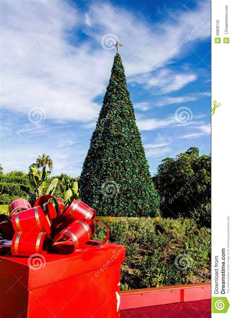 28 best the southern california christmas tree