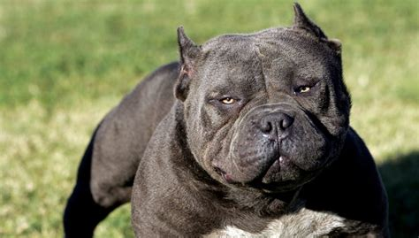 strongest breed 20 strongest breeds in the world