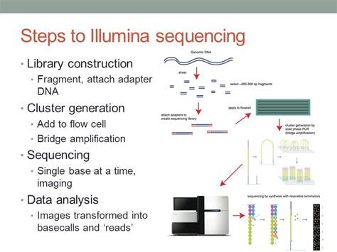 illumina gene sequencing introduction to illumina sequencing ppt
