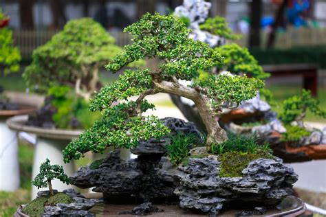 Painting Bathrooms Ideas 54 Pictures Of Bonsai Trees By Style And Shape
