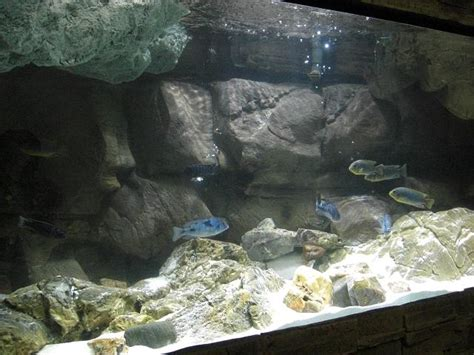 aquascape online aquascapeonline we sell a wide selection of piranhas