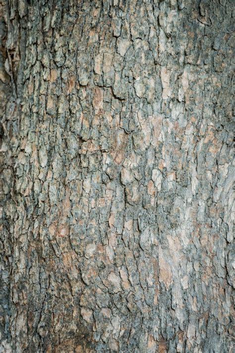 tree bark tree bark photo free