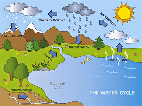 water cycle diagram pdf water cycle system elsavadorla