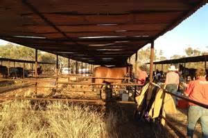 horse stables  landor race track abc news