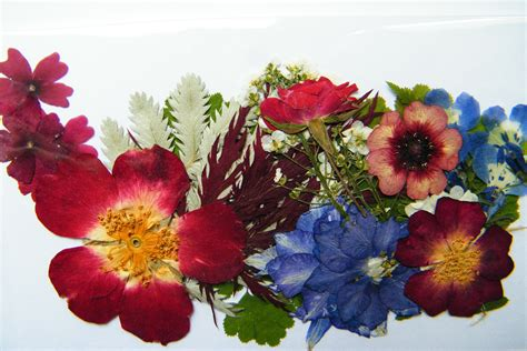 dried flowers dried leaves flowers crafts images