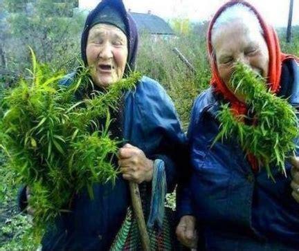 De beste verzameling van grappige foto's: cannabis oma kleindochter boksen Grappige oma's