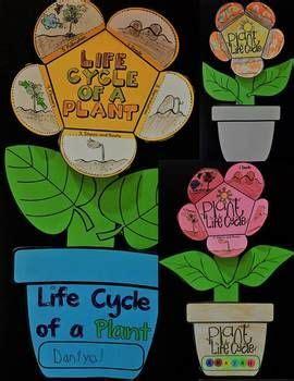 grado medio de jardin de infancia plant life cycle art activity template center games