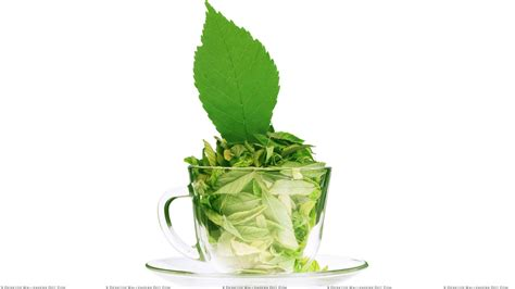wallpaper green tea green tea leaves in a cup white background wallpaper