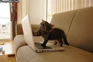 Cat Laptop Meme - cute and funny cats the oracle of ahwatukee