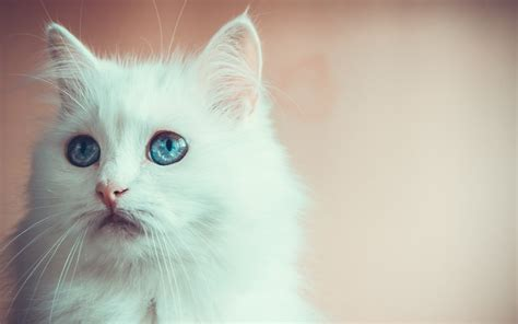 cat eyes wallpaper hd beautiful cat wallpapers hd pictures one hd wallpaper