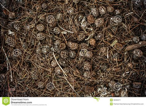 Max Brown By Dreamcone pile of pine chocks on the ground stock image cartoondealer 75143587