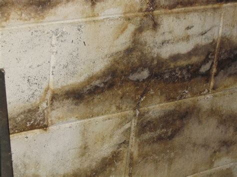 types of basement mold mold facts facts about mold cmi certified mold