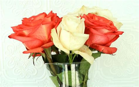How To Keep Roses Longer In A Vase by 14 Best Images About Floral Arrangements On